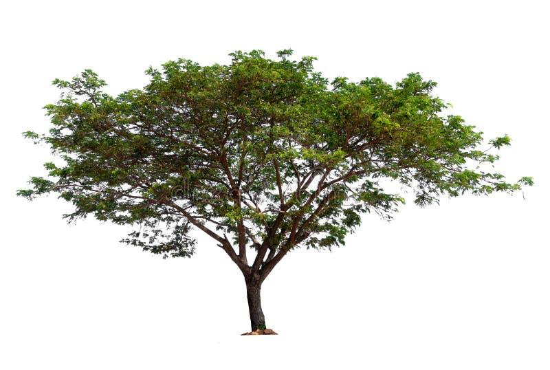 与裁减路线的唯一树 免版税图库摄影