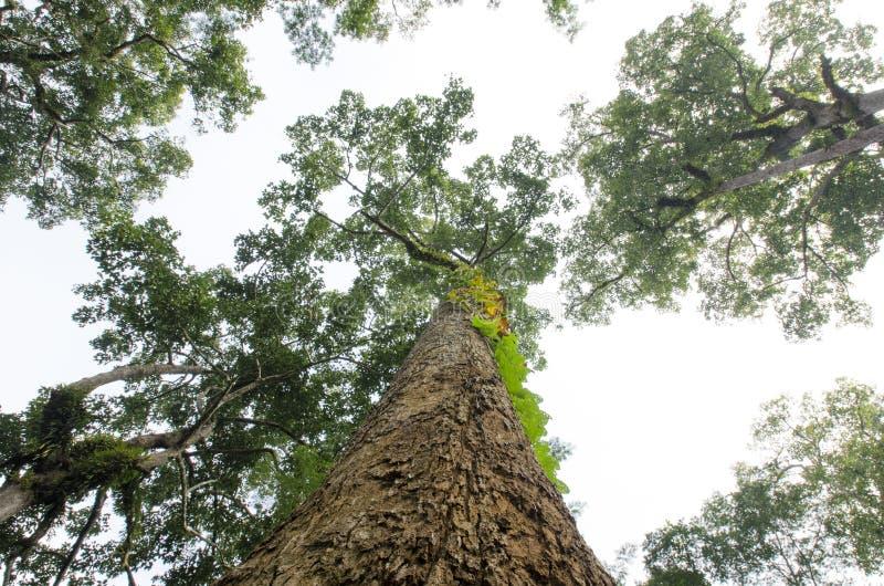 与裁减路线的树顶视图 免版税库存照片