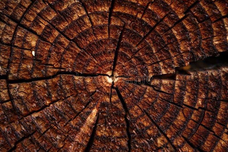 与裂纹发展圆环的木背景 库存照片