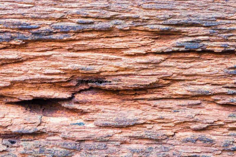 与裂缝的葡萄酒木地板老背景细节纹理黑褐色颜色木背景 免版税库存照片