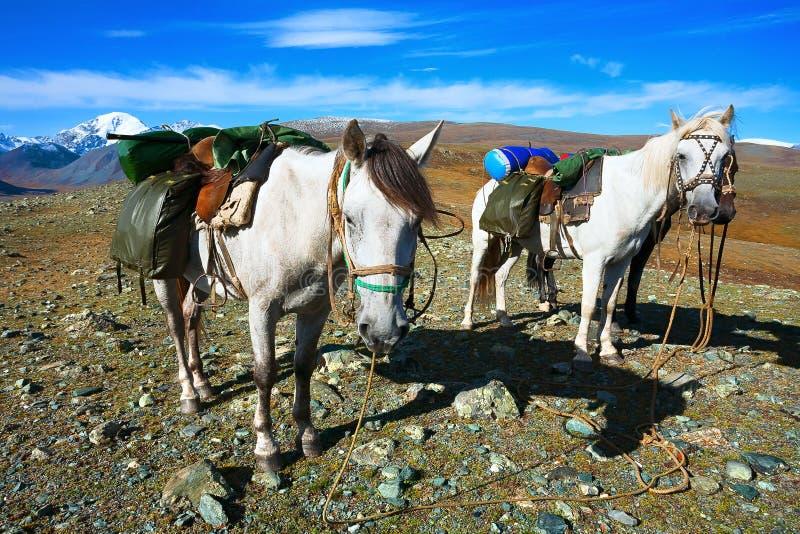 与装载的白马在山顶部 库存照片