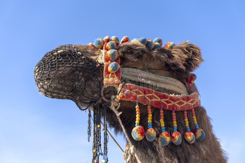 与装饰品和枪口的骆驼在他的在天空蔚蓝backgrou的头 免版税库存图片