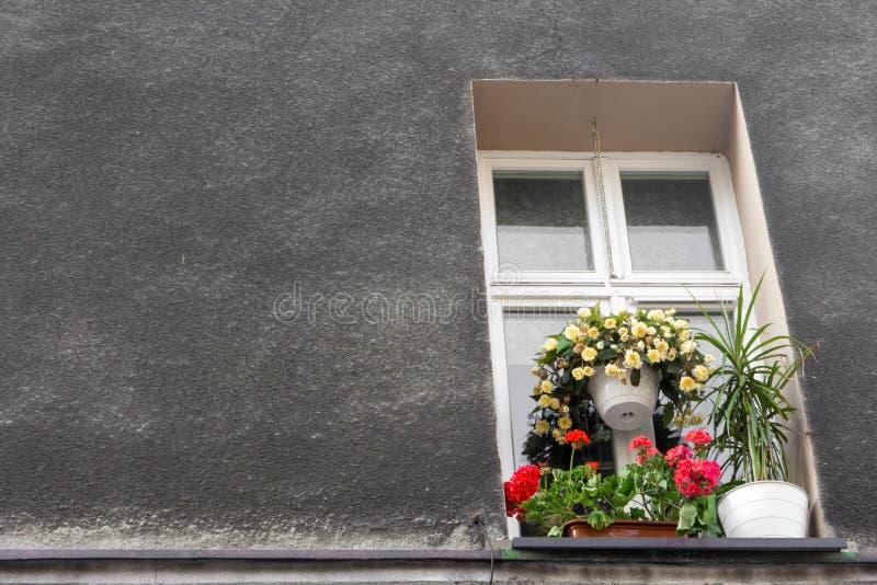 与装饰花盆的窗口对灰色石墙 意大利房子外部 欧洲旅行概念 库存图片