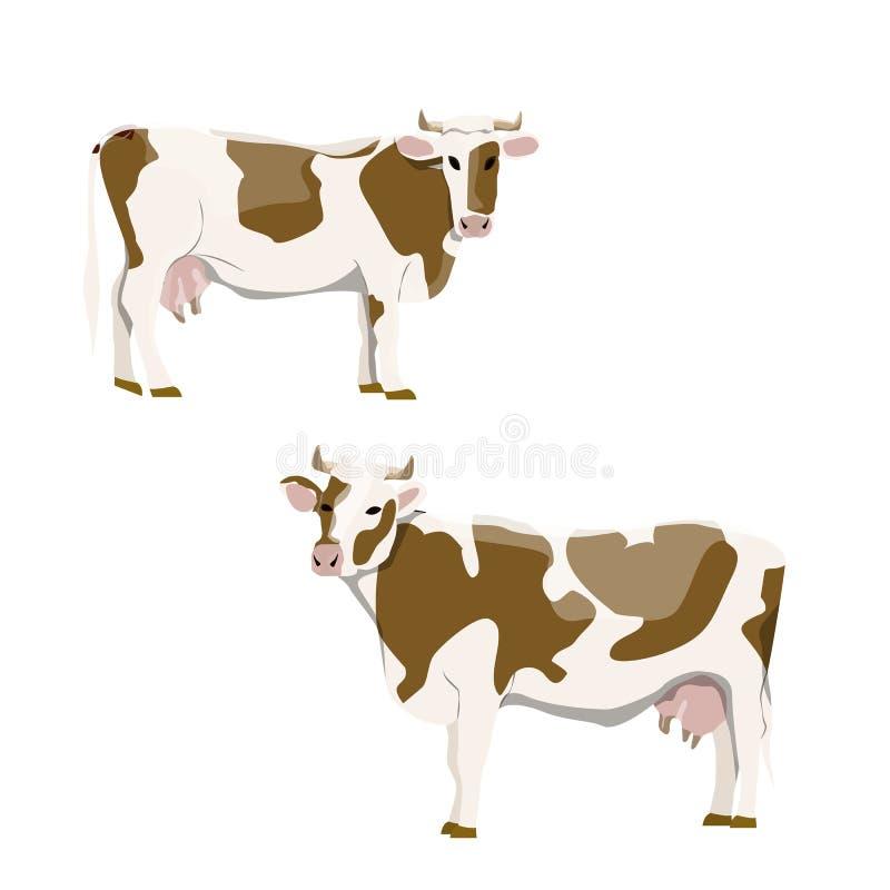 与褐斑病的白色母牛以各种各样的姿势 动物农场横向许多sheeeps夏天 库存例证