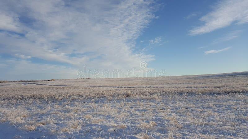 与触毛羽毛型云彩的惊人的深蓝天在干燥草原-自然背景 在的卷云 图库摄影