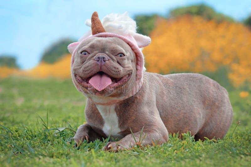 与说谎在模糊的橙色春天花backg ront的地面的滑稽的桃红色独角兽帽子的淡紫色烟草花叶病的色的法国牛头犬狗  免版税库存图片