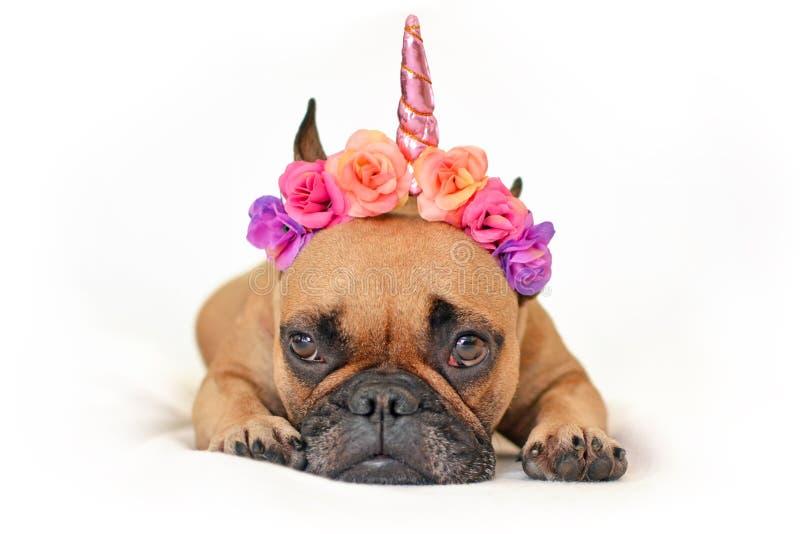 与说谎在白色演播室背景前面的地面的桃红色花和独角兽垫铁头饰带的逗人喜爱的棕色法国牛头犬狗 免版税库存照片