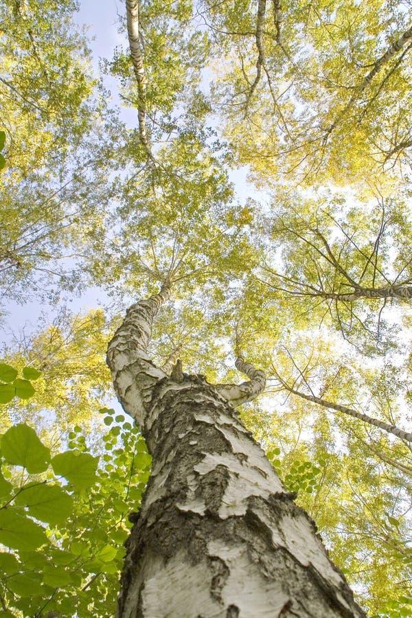 与调查天空的一棵独特的树和分支的自然风景 免版税库存图片