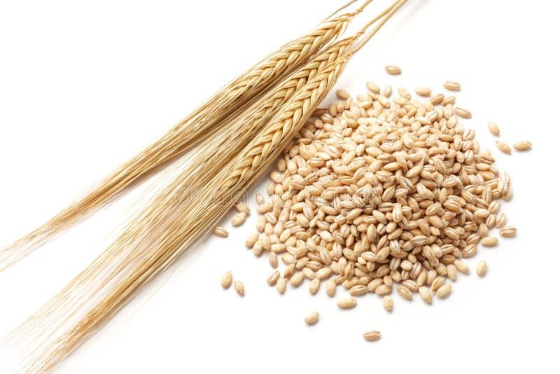 与谷物的大麦 免版税图库摄影