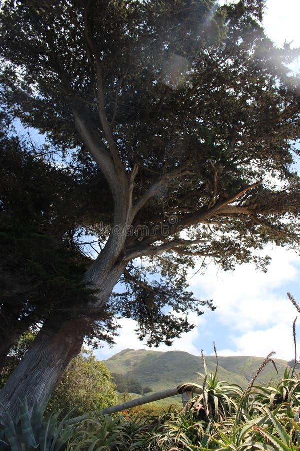 与象草的小山的大树 库存照片