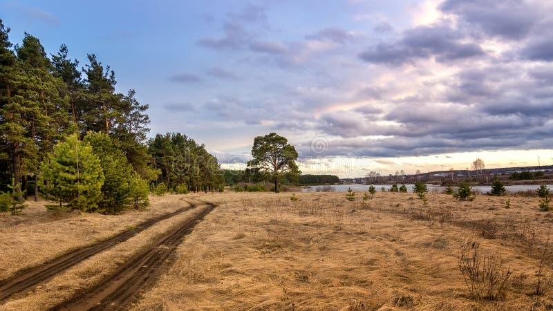 与豪华的杉树的晚上风景在河岸和土路,俄罗斯,乌拉尔 免版税图库摄影