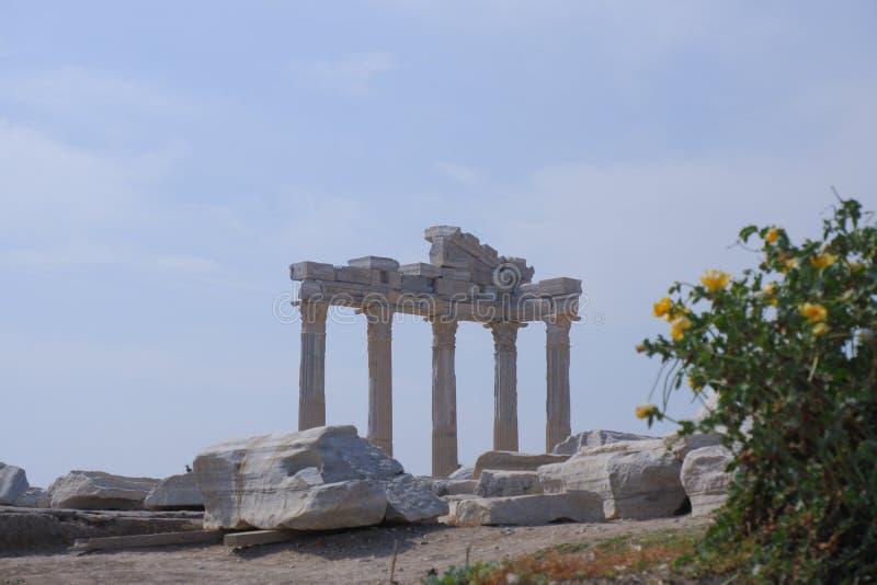 与豪华的绿色叶子的灌木黄色花在寺庙阿波罗的古老废墟的背景 免版税库存照片