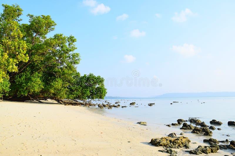 与豪华的绿色美洲红树的平静的白色沙滩在明亮的晴天- Vijaynagar, Havelock海岛,安达曼,印度 图库摄影