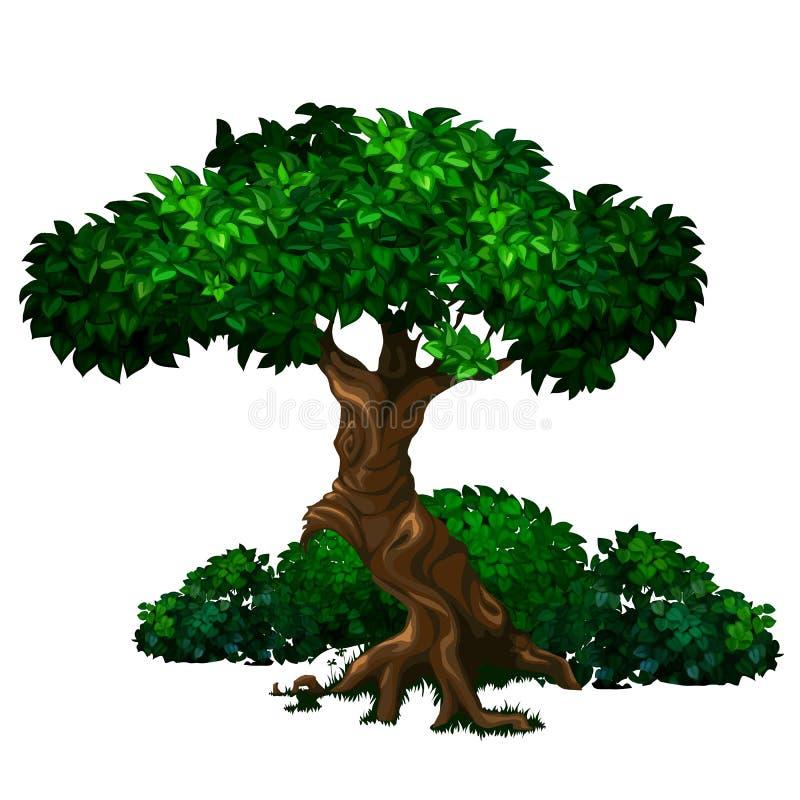 与豪华的绿色叶子的老大橡树和灌木在背景中 库存例证