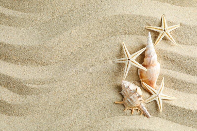 与贝壳和海星,文本的空间的清楚的海沙 ?? 库存图片