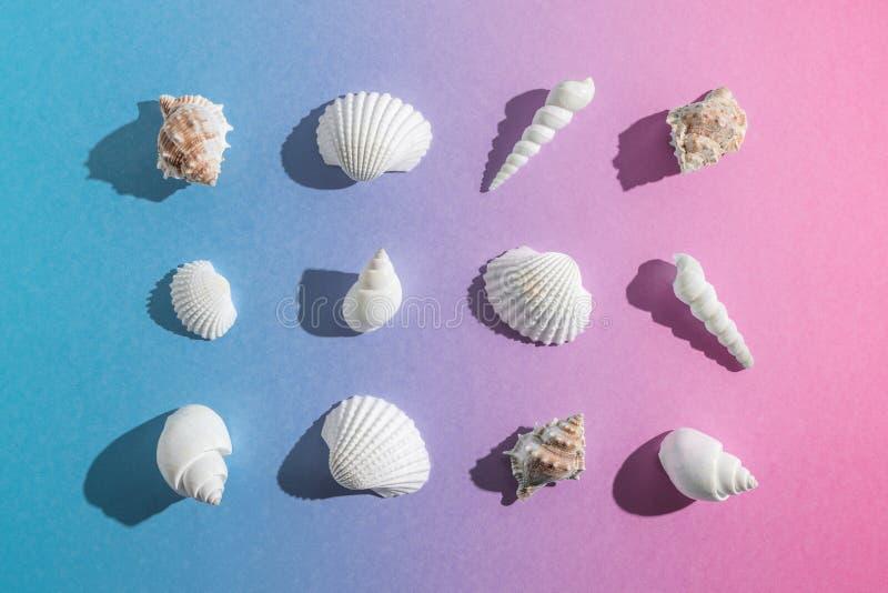 与贝壳的创造性的构成在梯度粉红彩笔和蓝色背景 夏天最小的概念 库存图片