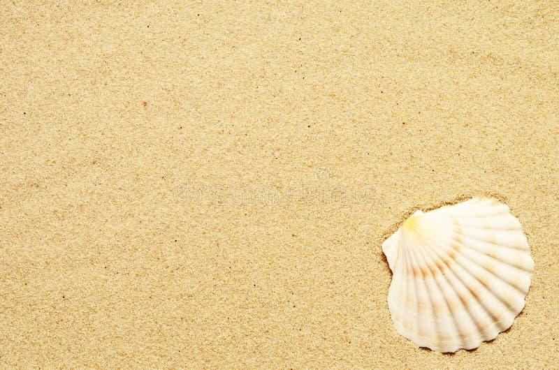 与贝壳的海沙 与拷贝空间的顶视图 免版税库存照片