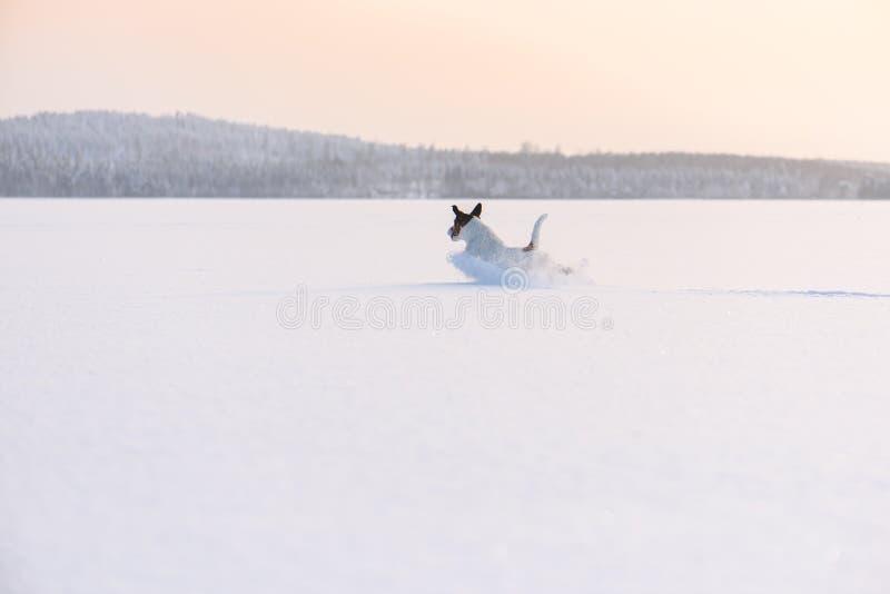 与跑通过冰冷的湖的狗的斯堪的纳维亚冬天风景 免版税库存图片