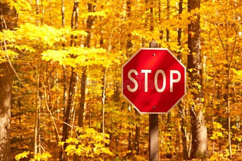 与路和停车牌的秋天场面 库存图片