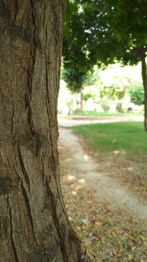 与路的树 库存图片
