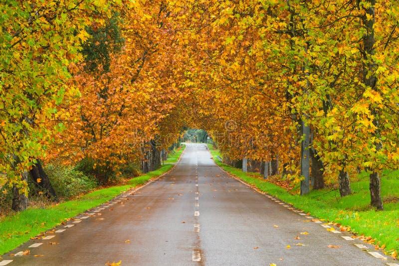 与路的秋天场面在孟山都的森林里 库存图片