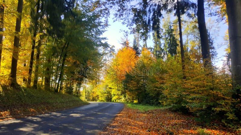 与路的秋天场面在森林里 免版税库存图片