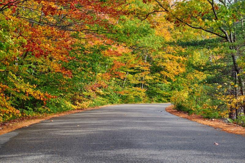 与路的秋天场面 免版税库存图片