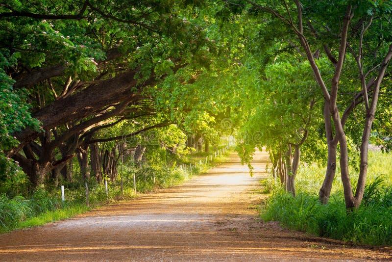 与路的隧道树 库存图片