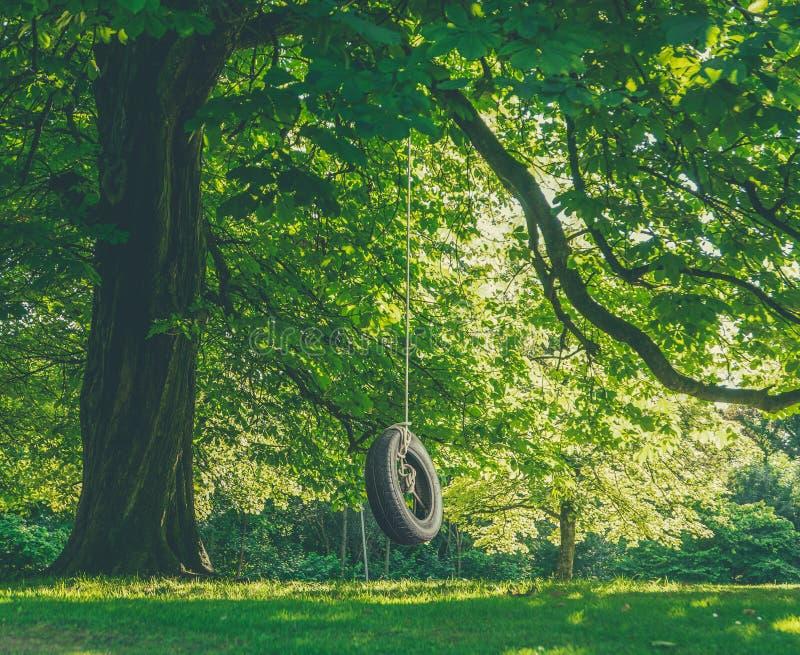 与轮胎摇摆的大树 免版税库存照片