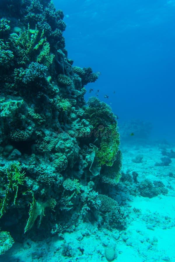 与软和坚硬珊瑚和异乎寻常的鱼anthias的珊瑚礁在大海背景的热带海,水下 库存照片