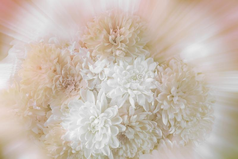 与软的选择聚焦的葡萄酒浪漫菊花花束在被弄脏的背景 库存图片