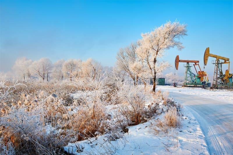 与软的霜和pumpig单位的树 库存照片