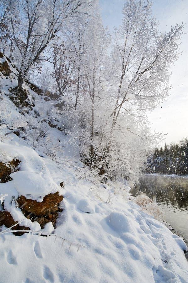 与软的霜的树在山坡 免版税图库摄影