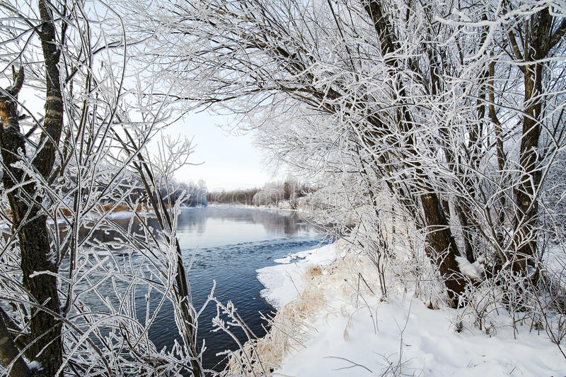 与软的霜的树 免版税图库摄影