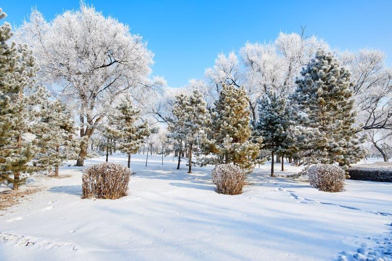 与软的霜的树 免版税库存图片