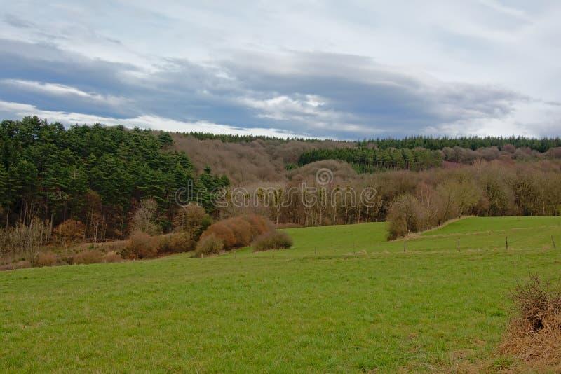 与辗压小山侧面的阿尔登风景与杉木和落叶树的在黑暗的云彩下 图库摄影