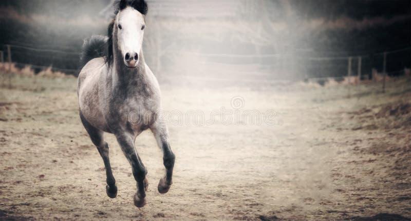 与运行在秋天牧场地的白色枪口的美丽的马 免版税库存照片