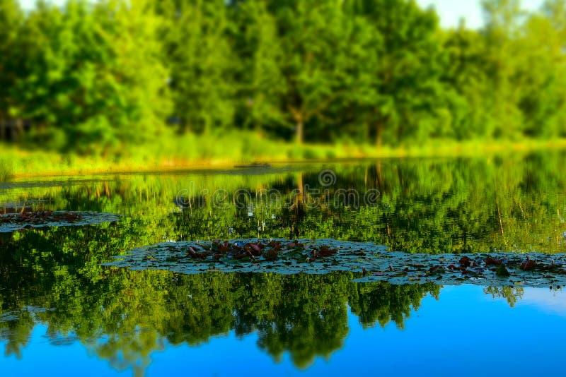 与选择聚焦的风景 树的反射在池塘 免版税库存照片