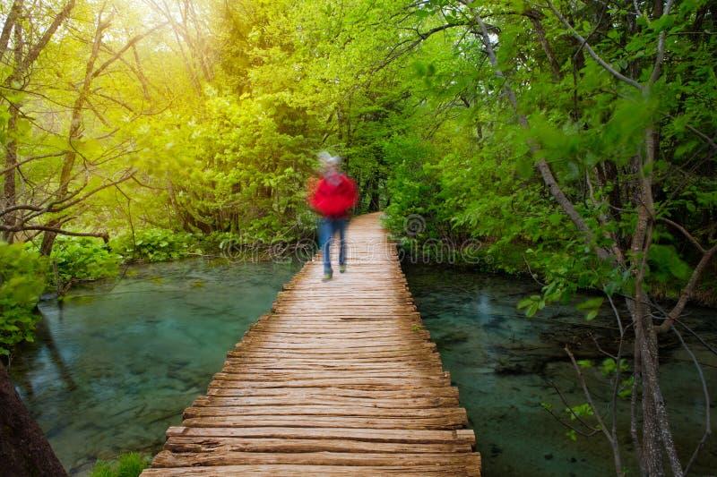 与透明的水和走的人的深森林小河在阳光下 库存图片