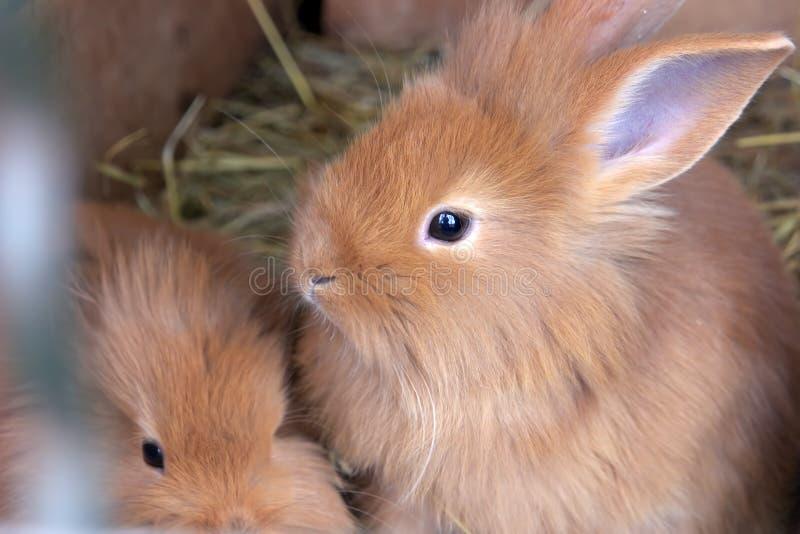 与逗人喜爱的婴孩的兔子 库存照片