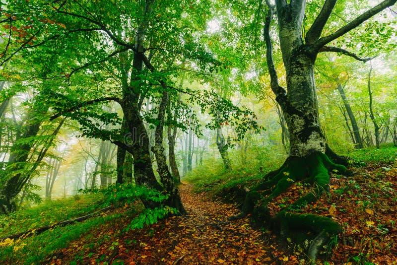 与道路的美好的五颜六色的森林场面在克罗地亚Plitvice 库存图片
