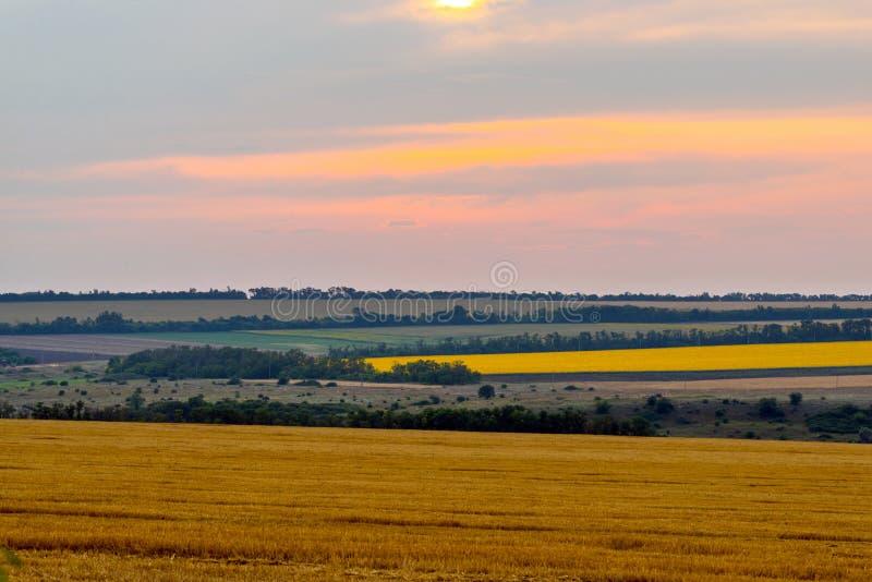 与道路的麦田风景在日落时间 库存照片