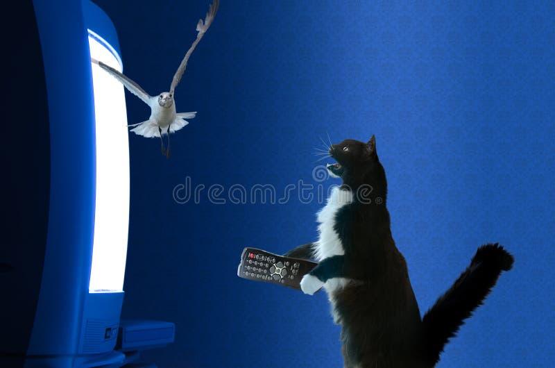 与遥控注意的电视的猫 免版税库存照片