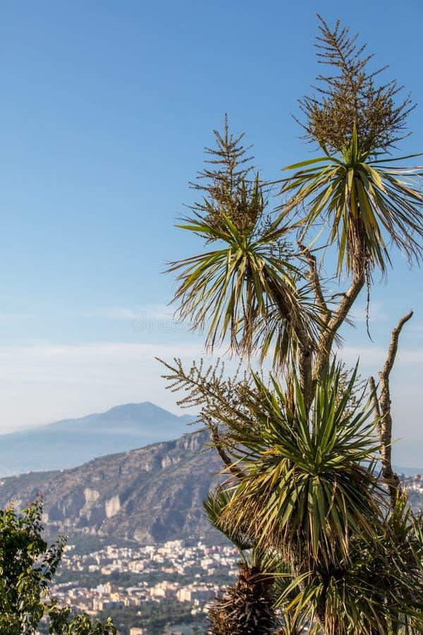 与那不勒斯和维苏威海湾的棕榈树在背景中 库存照片