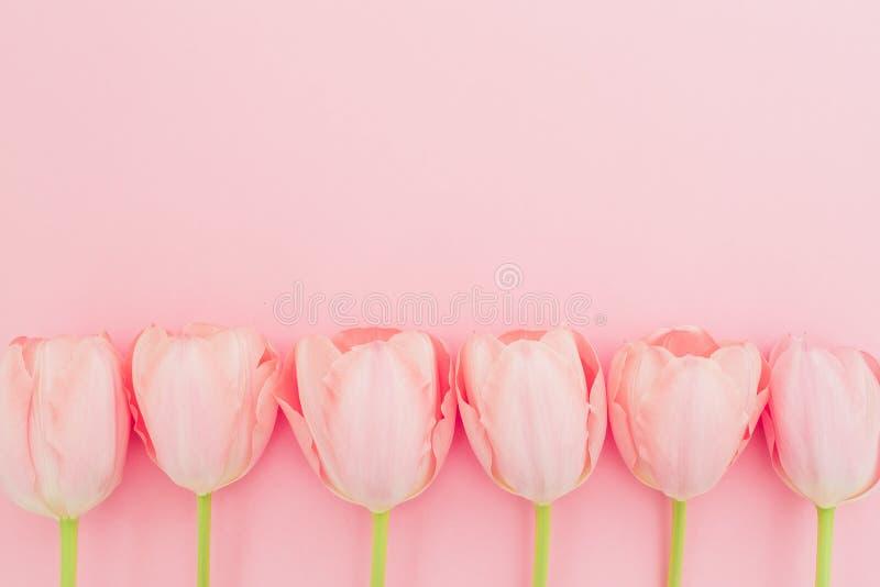 与郁金香的花卉样式在桃红色淡色背景开花 平的位置,顶视图 春天背景 免版税库存图片