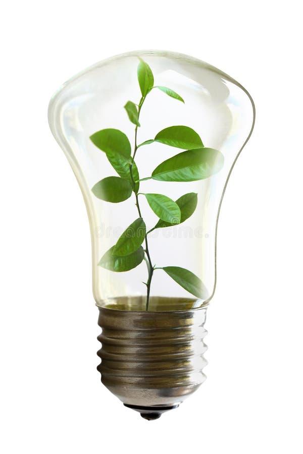 与里面一棵生长植物的电灯泡 库存图片