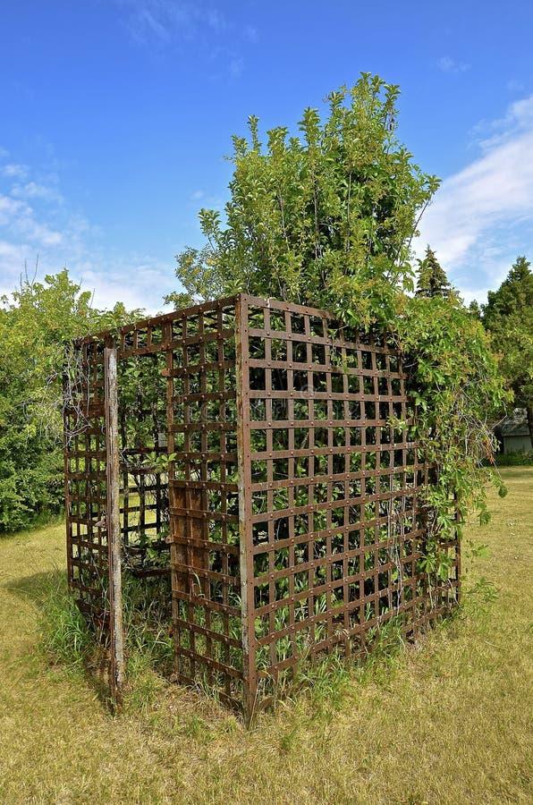 与里面树成长的外部牢房 免版税库存照片
