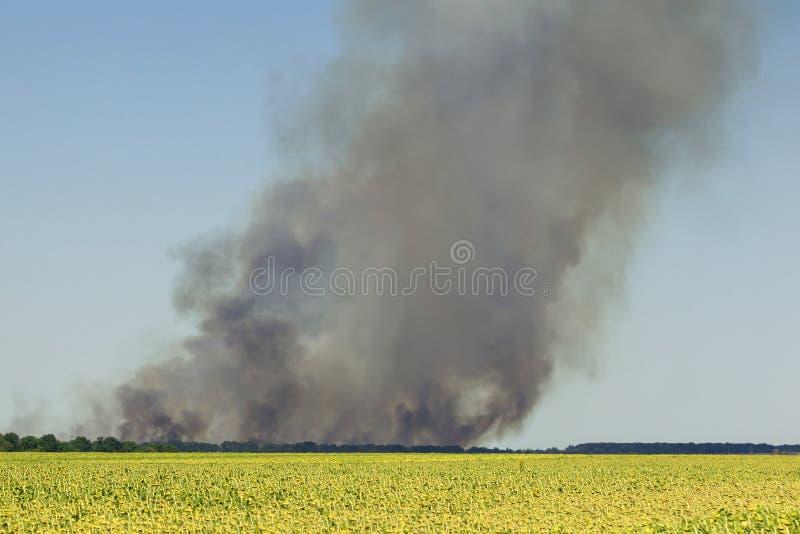 与重黑烟云上升的灼烧的农业领域 热天气灾害 环境污染由于有风和干燥 免版税库存照片