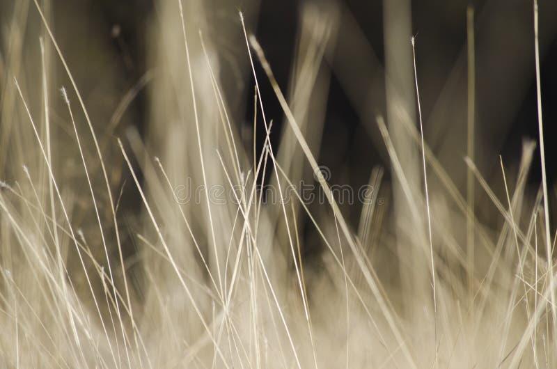 与野生棕色草的抽象自然本底 与干燥干草原草的风景 免版税图库摄影