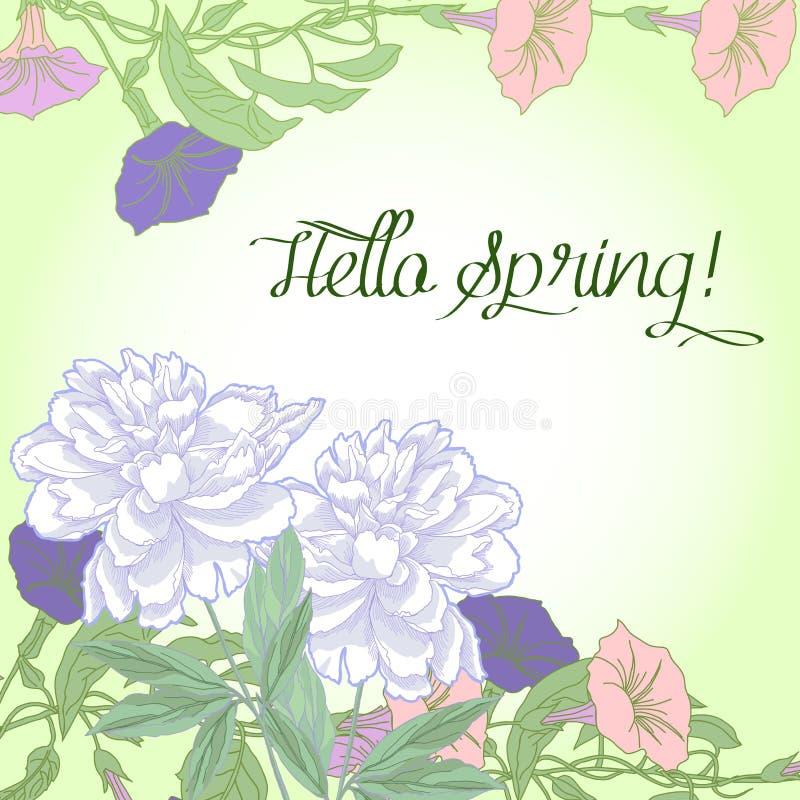 与野生植物和白色牡丹的春天背景 皇族释放例证
